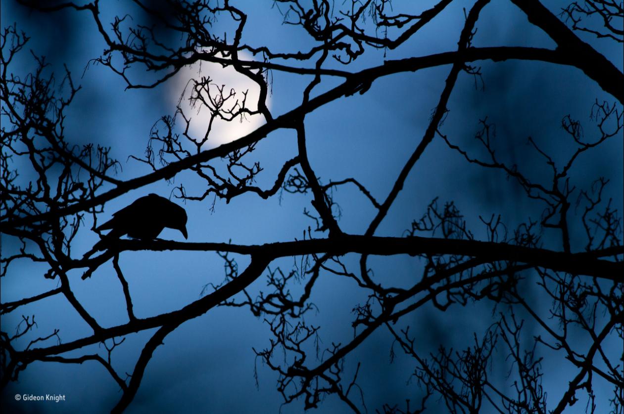 Una imagen de la luna (Foto: GIDEON KNIGHT)