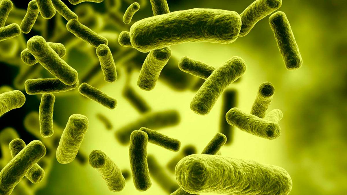 Te desvelamos la verdadera importancia de los microbios