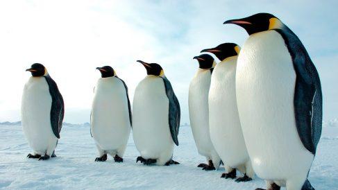 Descubre 5 especies de aves que no pueden volar
