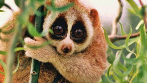 Descubre 5 mamíferos que no sabías que eran venenosos