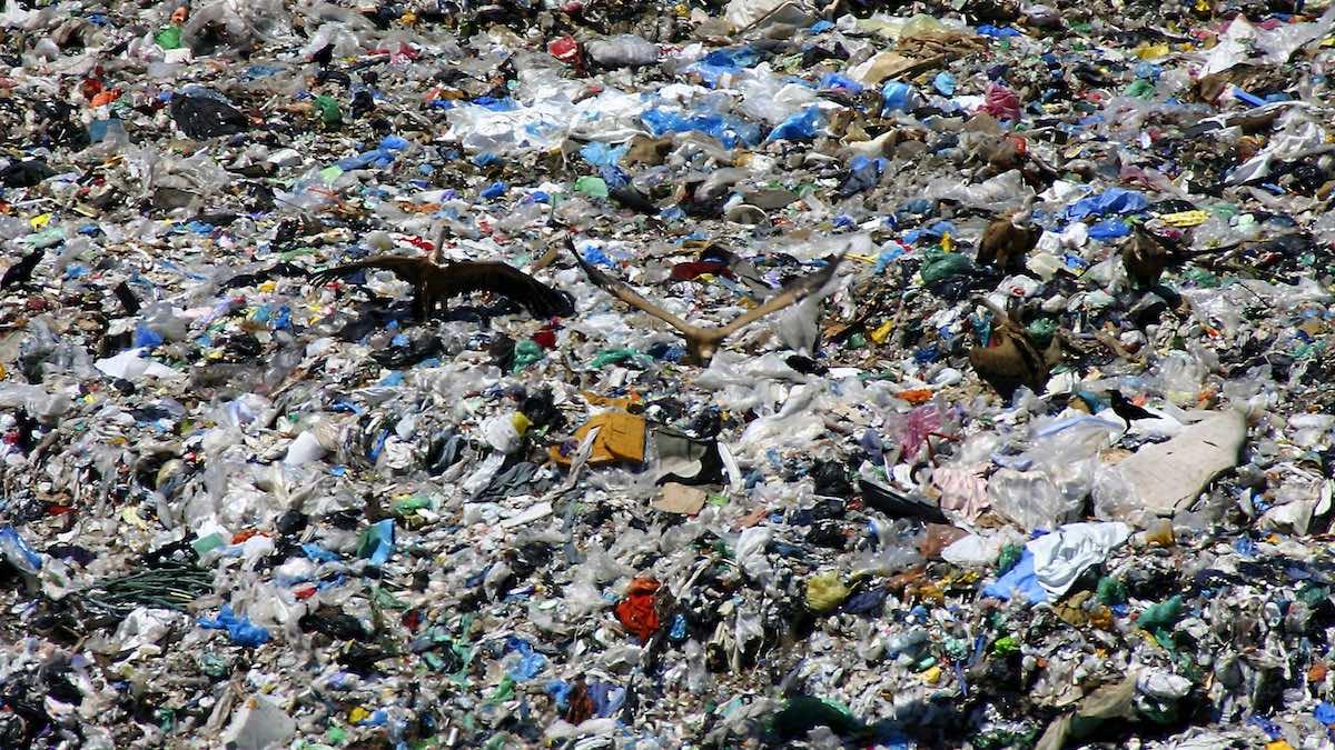 Un grupo de aves alimentándose en el vertedero de la planta de residuos de Urraca-Miguel, a 16 kilómetros de Ávila. (Foto: EFE)