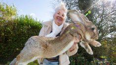 Descubre las cinco razas de conejos gigantes que te dejarán boquiabierto