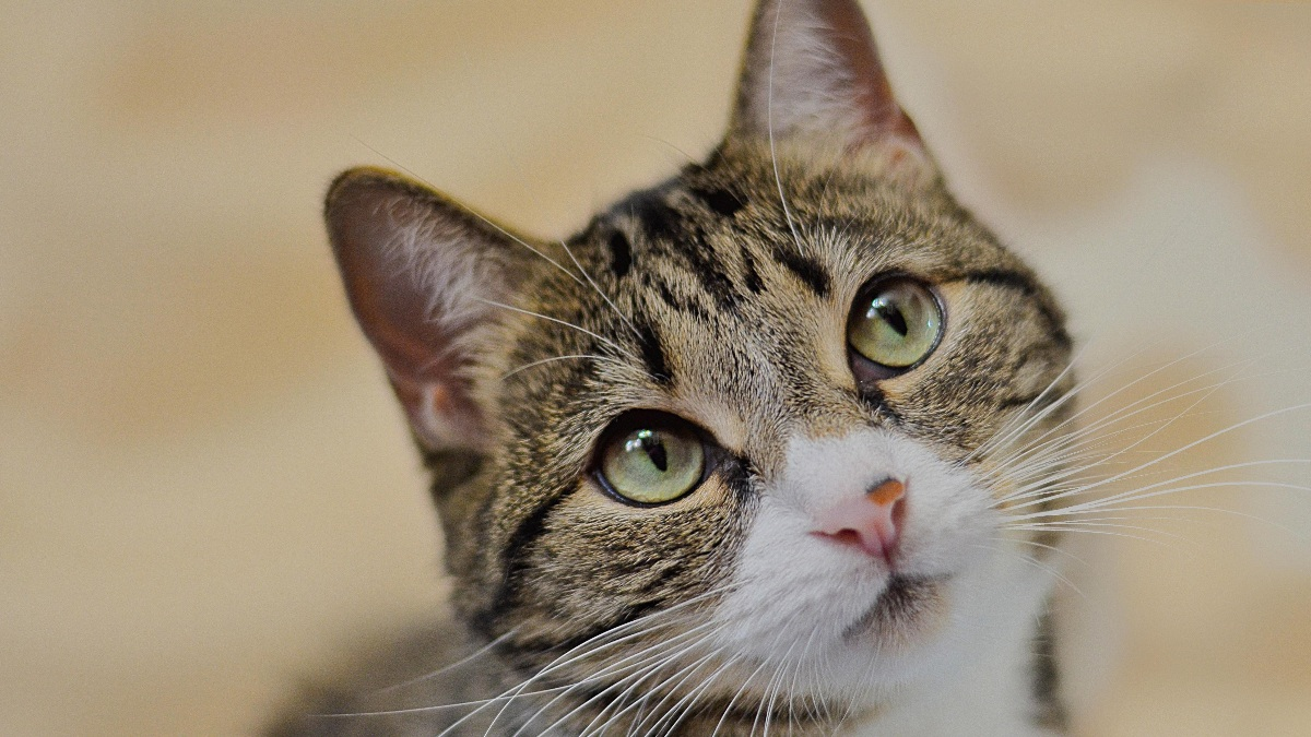 Los gatos son animales asombrosos