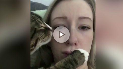 gato-cobra
