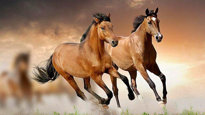 5 curiosidades sobre los caballos que debes saber