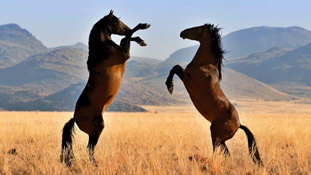 5 curiosidades sobre los caballos que debes saber - El caballo más caro de la historia