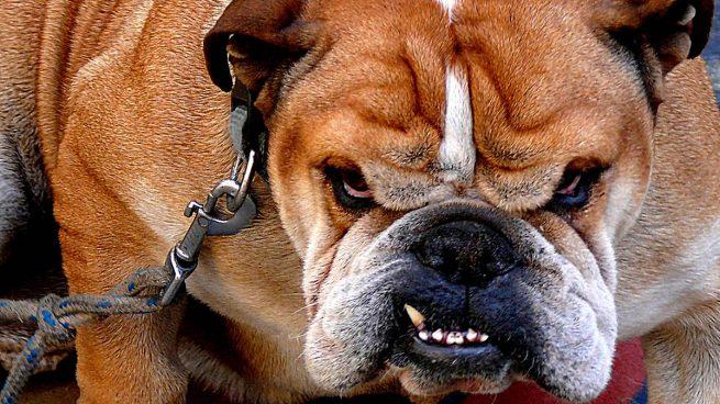 ¿Cuáles son las razas de perro más agresivas?
