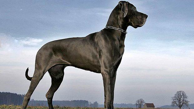 perro razas agresivas