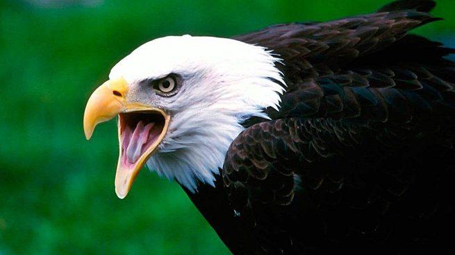Aves peligrosas: 5 aves que son un peligro para los seres humanos