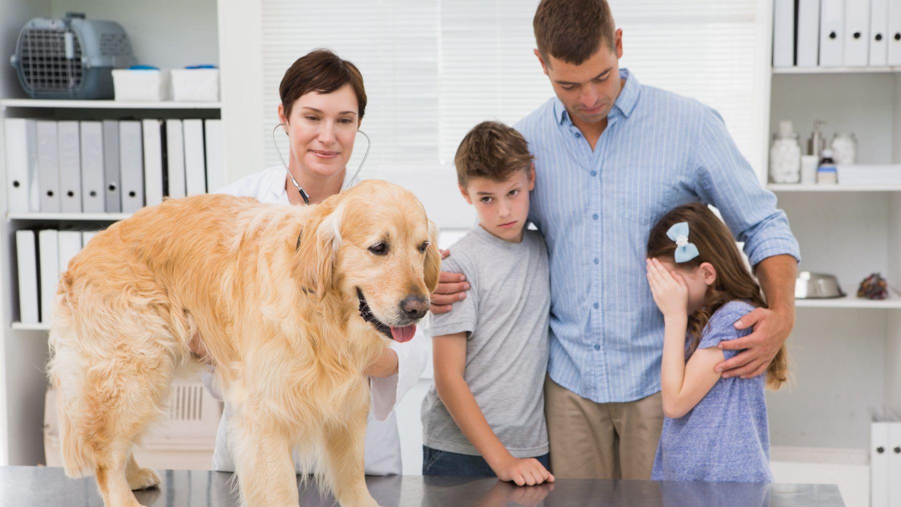 Descubre cómo le podemos explicar a .los niños que su mascota ya no está