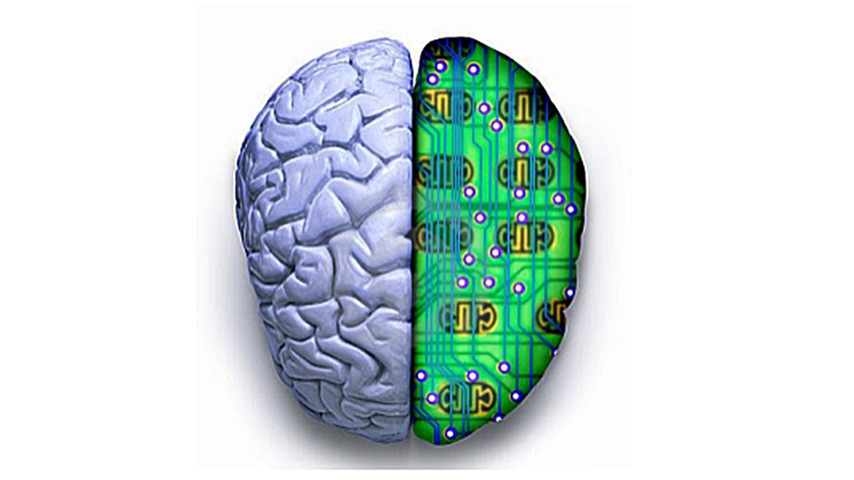 cerebro computadora diferencias