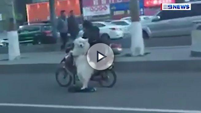 Un perro monta en patinete eléctrico en China y deja a todo el mundo alucinado