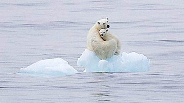 Polo Norte Calentamiento Global El Deshielo Del Polo Norte Como Consecuencia Del 2016 El