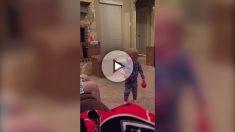 maracaas-video