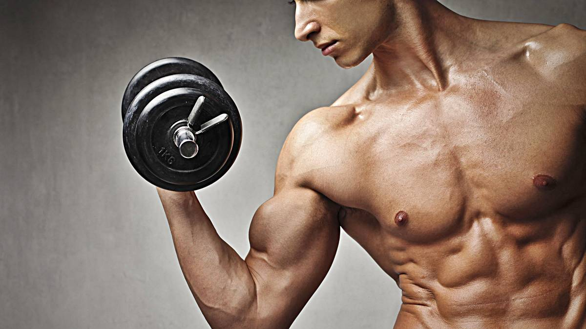 musculos clases