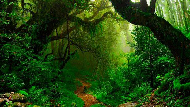 Los mejores consejos que debes saber sobre la selva tropical