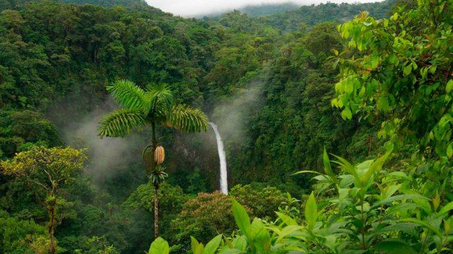 Los mejores consejos que debes saber sobre la selva tropical - Mas goy fornells de la selva ...