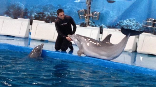 Colau quiere cerrar el delfinario del Zoo de Barcelona antes de 2019