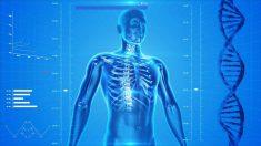 Descubre datos sobre el cuerpo humano que te harán sacar la calculadora