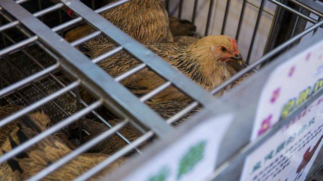 Segundo caso humano de gripe aviar en Hong Kong