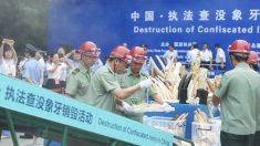 Operarios chinos destruyen piezas ilegales de marfil (Foto: AFP)