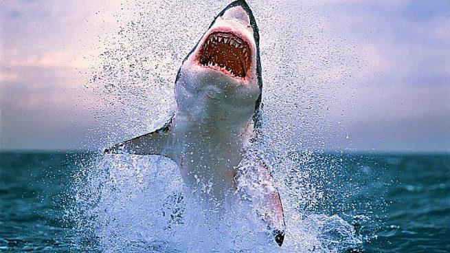 tiburones mas grandes