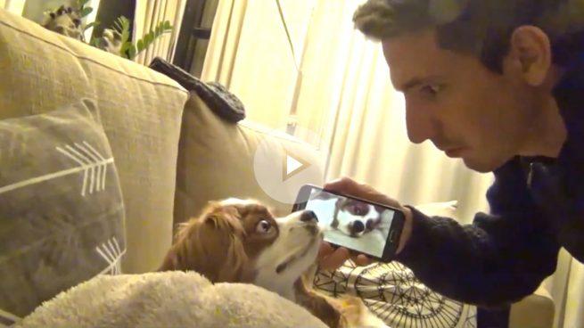 Un dueño indignado graba los ronquidos de su perro y se hace viral