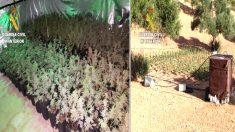 Cultivos de marihuana en Antequera (Foto: Efe).