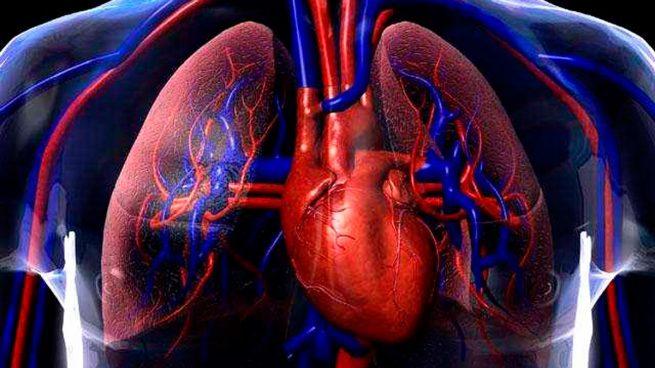 Circuito Circulatorio : Curiosidades sobre el sistema circulatorio que no conocías