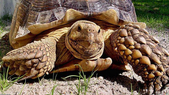 tortugas dan miedo extrañas