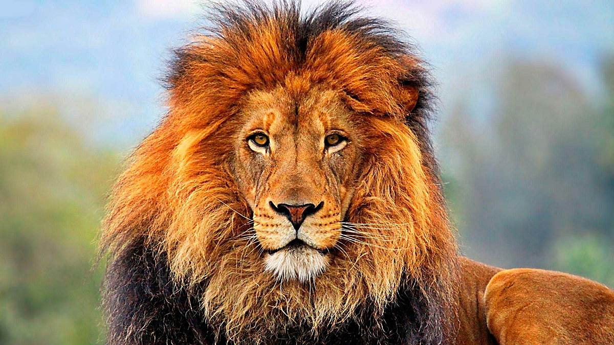 animales sagrados leon