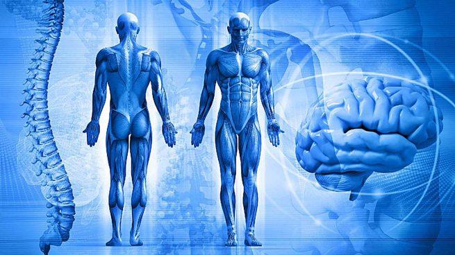 cuerpo humano curiosidades