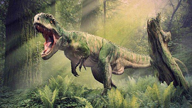 5 Curiosidades Sobre El Tiranosaurio Rex Que No Conocias El tiranosaurio rex es uno de los dinosaurios más estudiados y más reconocidos por la cultura era un dinosaurio realmente grande, podía medir hasta 12.3 metros de largo, casi como un camión. curiosidades sobre el tiranosaurio rex