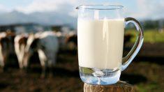 Ventajas e inconvenientes de tomar leche (1)