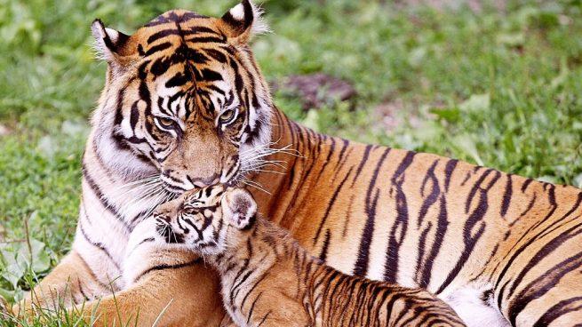 5 Animales En Peligro De Extincion Del Planeta