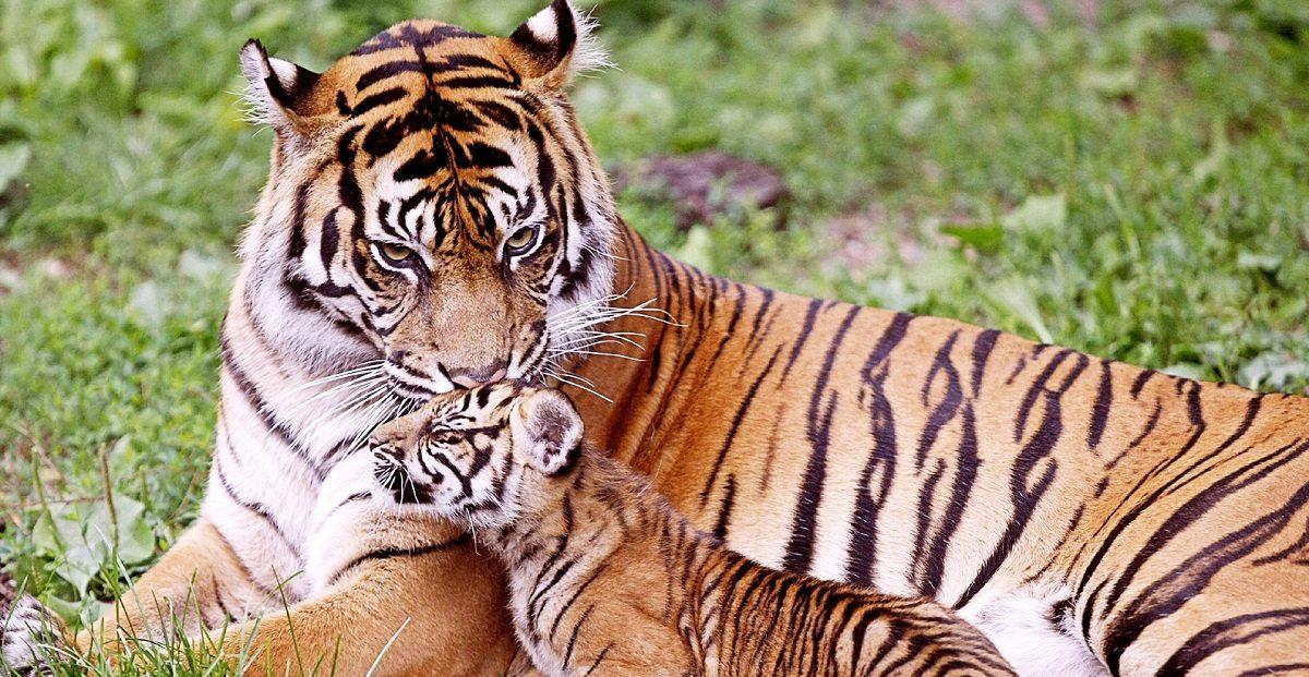 5 animales en peligro de extinción del planeta (3)