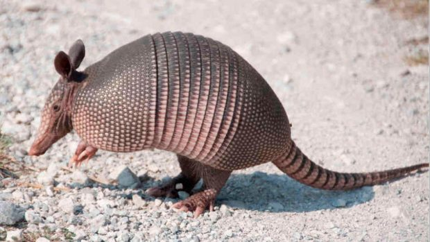 Los mamíferos más parecidos a los reptiles