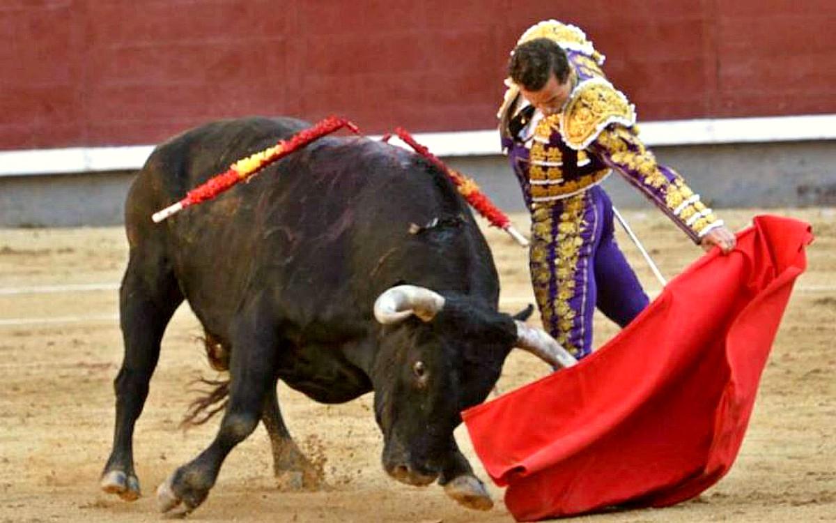 Fotos de toros de toros