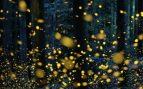 5 curiosidades sobre las luciérnagas que seguro te sorprenderán