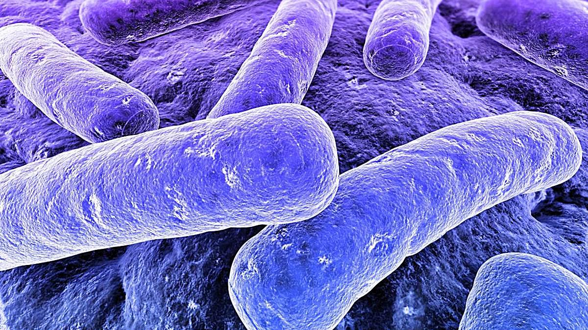 diferencia entre bacterias gram negativas y gram positivas