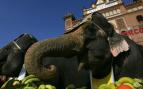 Elefantes en la Plaza de Toros de Las Ventas presentando el