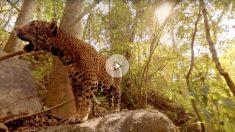 Uno de los videos filmados en 360º en plena naturaleza. Foto: Condition One VR