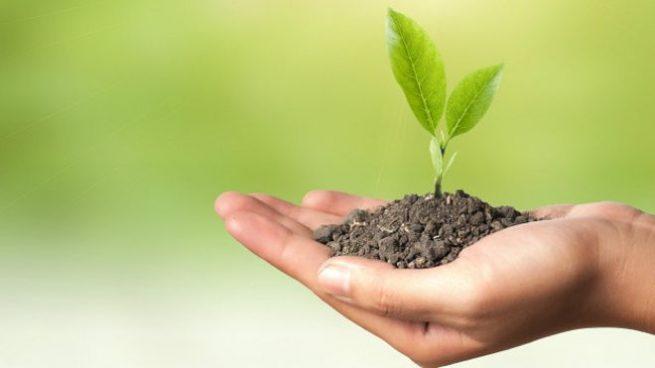 5 plantas que debes tener en casa para limpiar el aire según la nasa