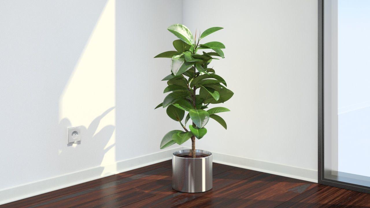 5 plantas que debes tener en casa para limpiar el aire for El mejor arbol para plantar en casa