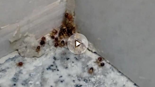Plaga de arañas en la Alcaldía de Carmena: el gran foco está junto al catering