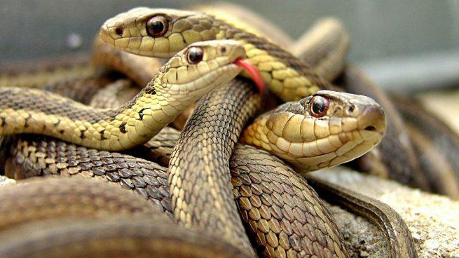 serpientes curiosidades no conocías