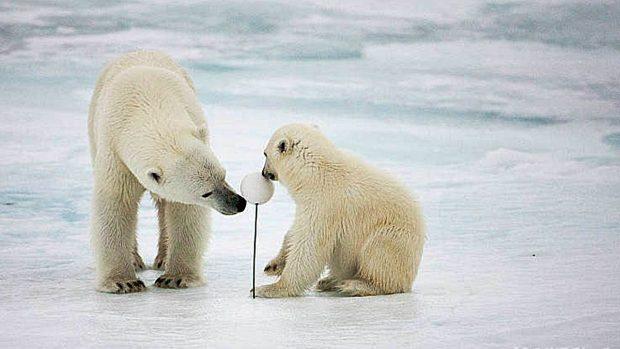 Ártico Antártico diferencias