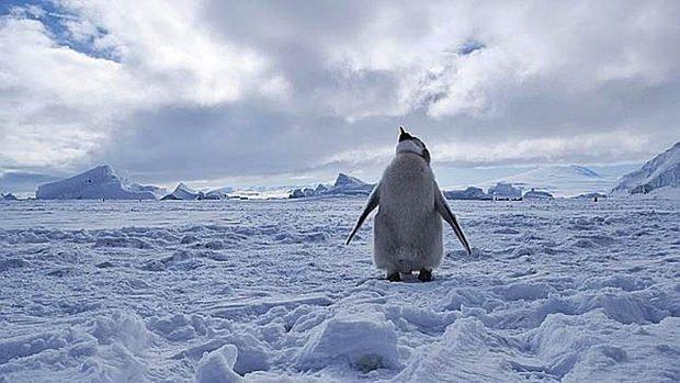 Ártico Antártida diferencias