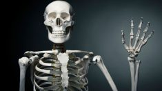Los 5 datos más interesantes del esqueleto humano