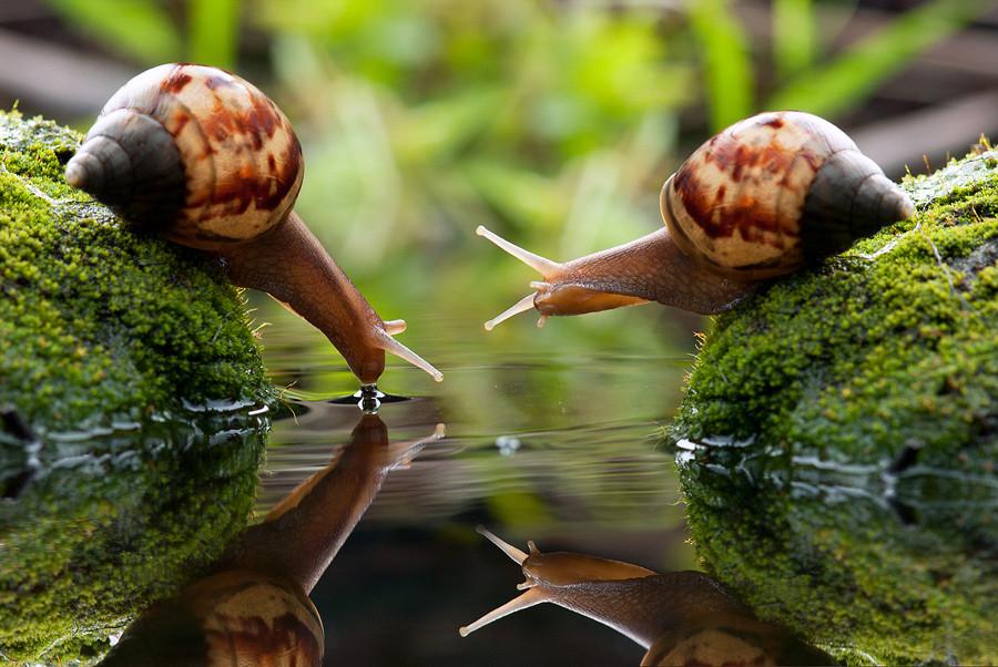 7 curiosidades sobre los caracoles que te sorprenderán